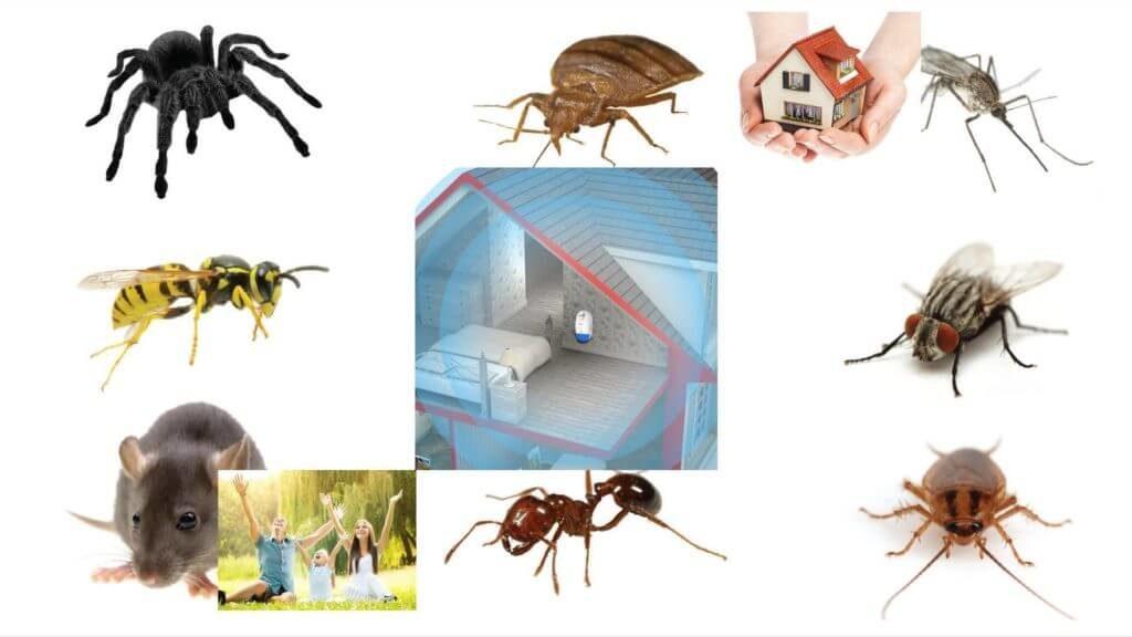 plug in pest control